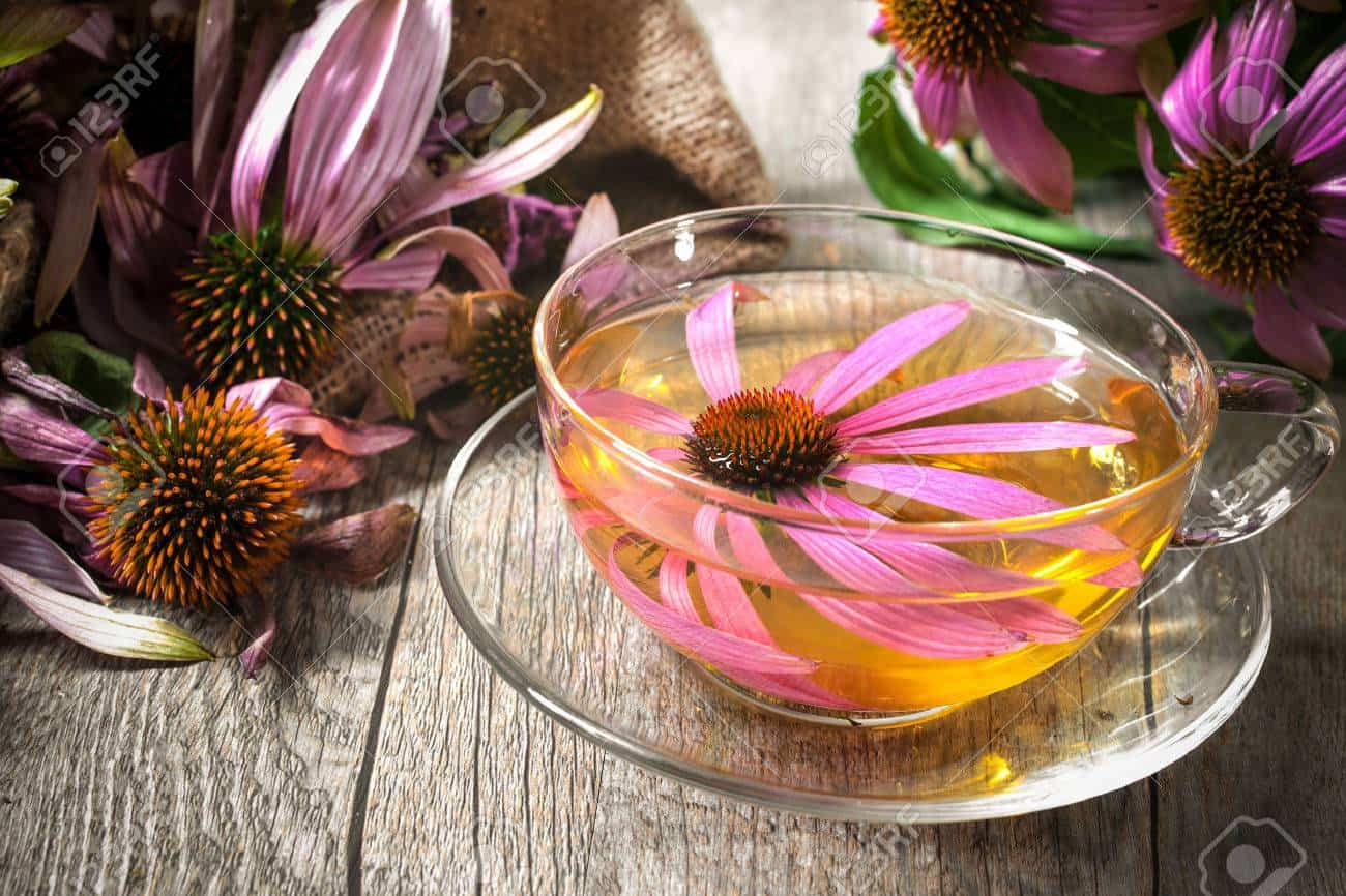 echinacea purpurea cup of tea 1